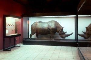 Imagen Museo Historia Natural Cracovia