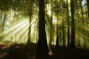 Selva de Irati_Creative Commons